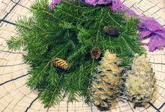 Still-life. branches of a green Christmas tree, two pine cones on a light background royalty free stock photos