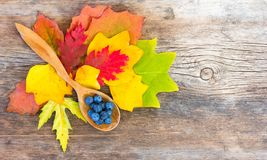 Still life of bright autumn leaves and blackthorn berries in a wooden spoon on an old wooden knotty cracked board Stock Photo