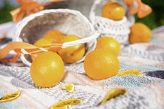 Still life from bright oranges in summer on picnic Royalty Free Stock Photography