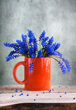 Still life bunch grape hyacinths Stock Photos