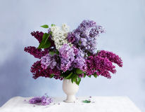 Still-life with a bunch of lilac Stock Images