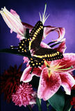 Still life with butterfly. royalty free stock photos