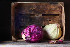 Still life with  cabbage Stock Images
