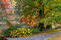 Still life and calm place near water at autumn with golden leafs in Bratislava park Stock Photo