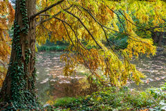 Still life and calm place near water at autumn with golden leafs in Bratislava park Royalty Free Stock Images
