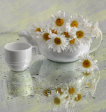 Still life with camomiles in a tea-pot Royalty Free Stock Photo