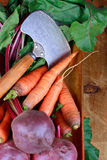 Still life with carrots Royalty Free Stock Image