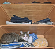 Still-life with cat. Cat in wardrobe, close up stock photos