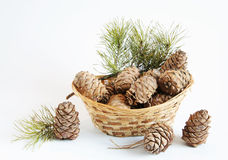Still life cedar cones in a decorative basket Stock Images