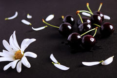Still life with cherries. Stock Photo