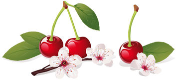 Still life with cherry Stock Photography