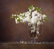 Still life with cherry blossoms in a glass jug Royalty Free Stock Photos