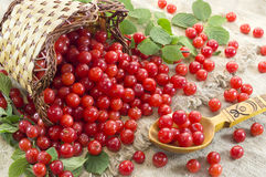 Still life with cherry Royalty Free Stock Photo