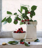 Still life with cherry and snail in vintage way Royalty Free Stock Image