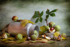 Still life with chestnuts Stock Photo