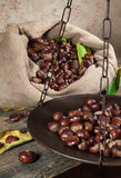 Still life with chestnuts Royalty Free Stock Photo