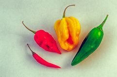 Still life of chilli Stock Photography