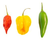 Still life of chilli Stock Images