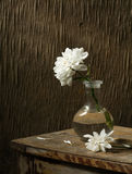 Still-life with a chrysanthemum Stock Images