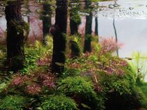 Free Still Life Close Up Of Beautiful Tropical Aqua Scape, Nature Aquarium Green Plant An Tropical Colorful Fish In Aquarium Fish Tank. Stock Photo - 127002090