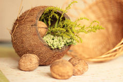 Still life, coconut, nuts, plants Stock Photo