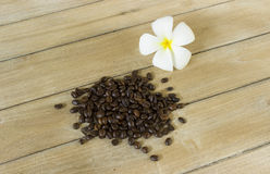 Still Life coffee bean Stock Images
