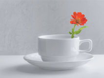 Still life coffee cup Royalty Free Stock Photography