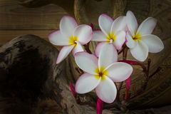 Still life colour tone of pink flower plumeria bunch with old ba. Ked clay vase and timber wood background royalty free stock photography