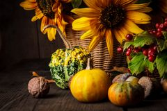 Still life in colours of autumn Stock Images