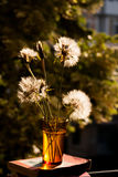 Still life composition with dandelions and old books on natural background, at the window Stock Photos