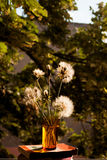 Still life composition with dandelions and old books on natural background Stock Image
