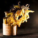 Still life composition with dried sun flower Royalty Free Stock Photography