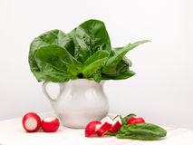 Still life composition with fresh spinach and radishes Royalty Free Stock Images