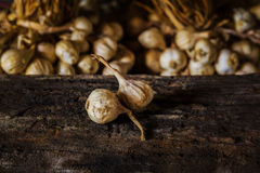Still Life Composition With Garlic Royalty Free Stock Image