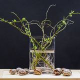Still Life Composition With Willow Branches With Small Leaves And Pink Roots In A Transparent Vase And Snail Shells