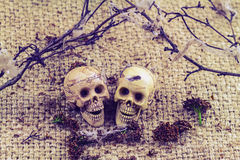 Still life concept human body bone male and female sit on dry b. Ranches with old cobweb and flower of moke indicate love forever Stock Images