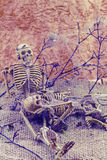 Still  life concept human body bone male and female sit on dry b Stock Images