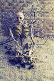 Still life concept human body bone and old cobweb on dry branc. Hes and flower of moke royalty free stock photos