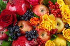 Still life consisting of pomegranates, apples, black rowan, red viburnum, pears, lemons and flowers of red and yellow roses close- royalty free stock images