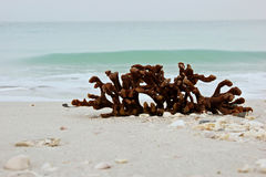 Still life of coral on beach with ocean Stock Photography