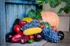 Still life of corn, grapes, eggplant, pumpkins and peppers on the old background. Stock Photography