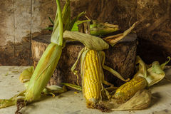 Still life with corn Stock Images