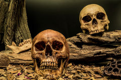 Still life couple human skull art abstract background Royalty Free Stock Image