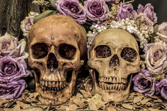 Still life couple human skull art abstract background Stock Photos