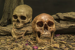 Still life couple human skull art abstract background Stock Images