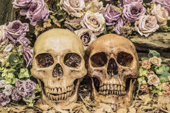 Still life couple human skull with roses. Still life painting photography with couple human skull on dried leaves with roses background, love concept, grunge royalty free stock image