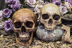 Still life couple human skull with roses and timber Stock Image