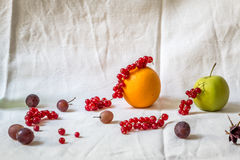 Still life with cranberry, grapes, oranges and apples. In the studio Stock Photo