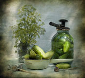 still life with cucumbers and dill Royalty Free Stock Image