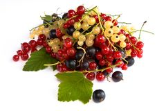 Still life with currants Stock Photo
